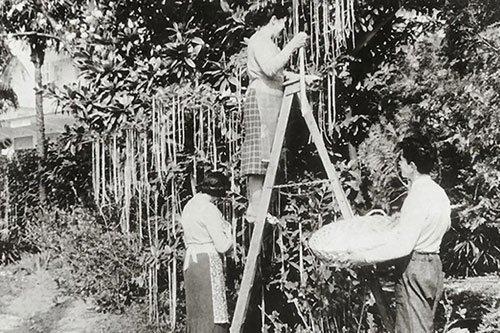 макаронное дерево. шутка