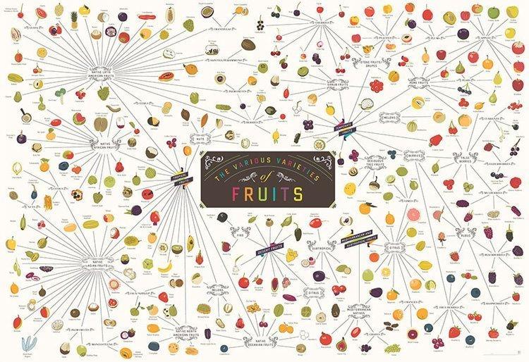 Виды фруктов. Инфографика