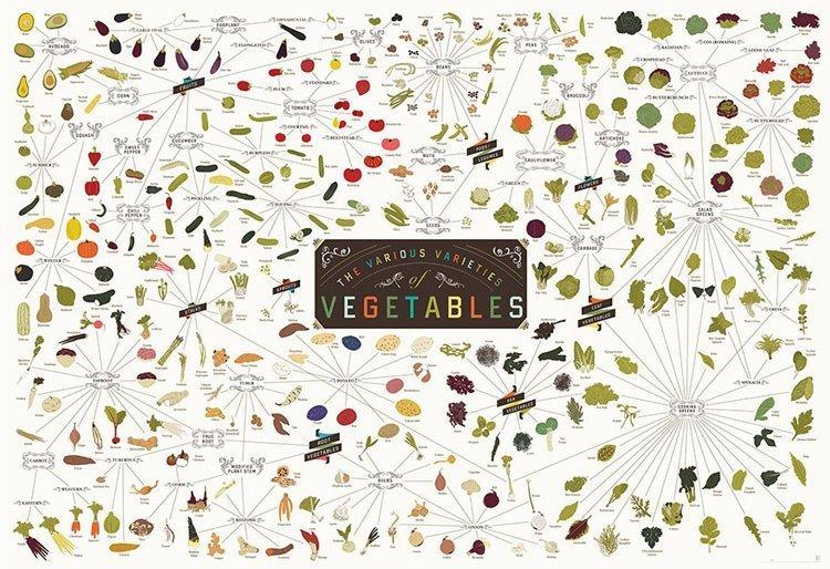 Виды овощей. Инфографика