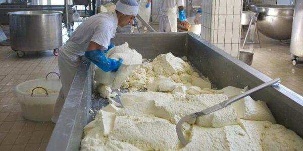 Просушивание сырной массы