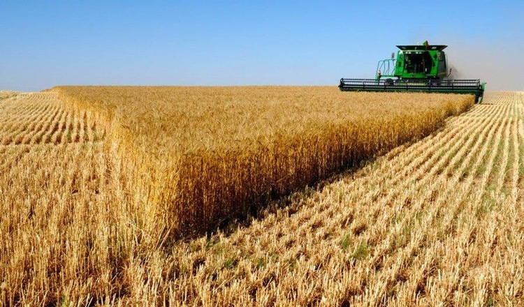 Сбор урожая пшеницы комбайном