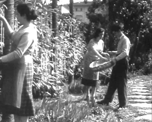 макаронное дерево. шутка bbc