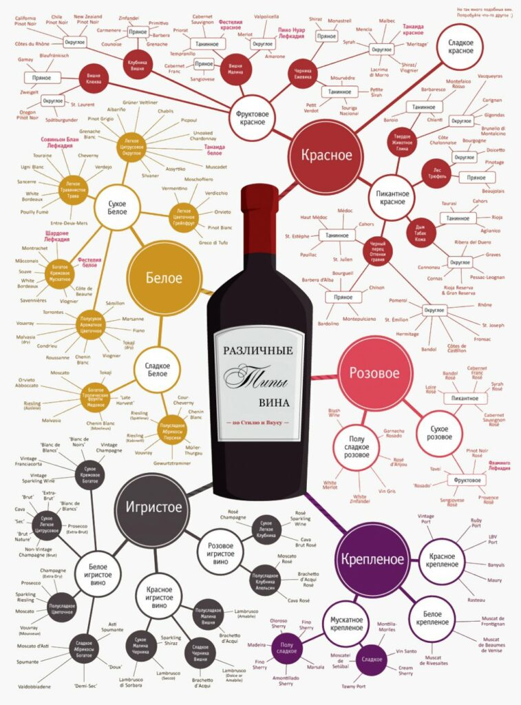 Виды и типы вина в картине-схеме. Винная инфографика