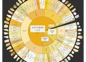 Виды сыров, пасты, овощей и фруктов в инфографике