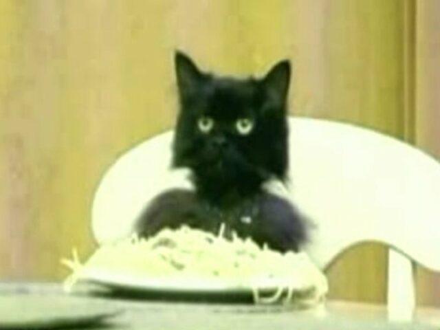 Спагетти кот (Spaghetti Cat)