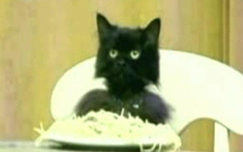 Спагетти-кошка или спагетти-кот (Spaghetti Cat)