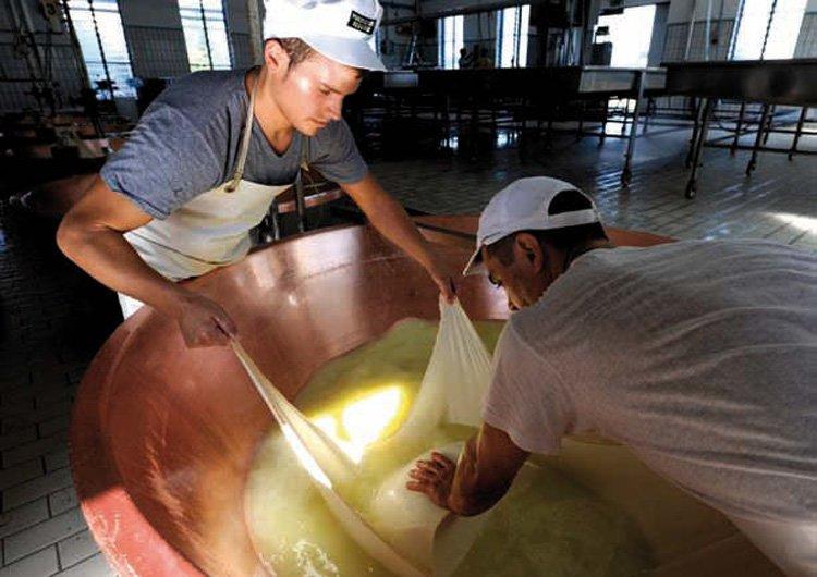 Как производят настоящий пармезан. Удаление жидкости из сырной массы
