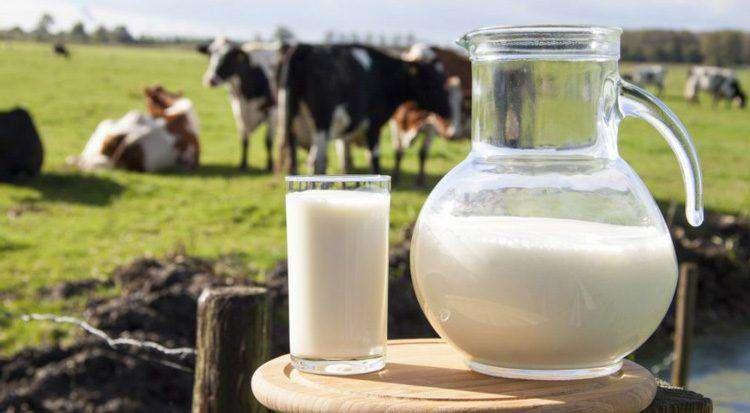 Краткие характеристики сыра моцарелла из молока коровы